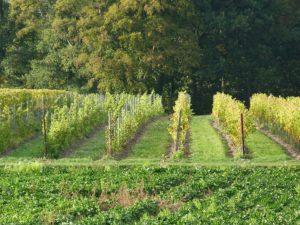 Vakantieboerderij de Holdeurn - omgeving