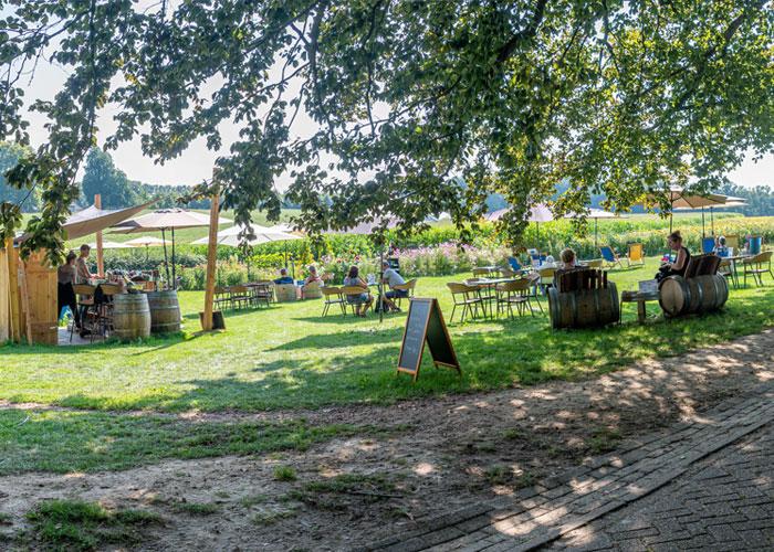 Vakantieboerderij de Holdeurn - wijnterras